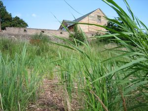 reedbed sewage treatment Architype Hereford